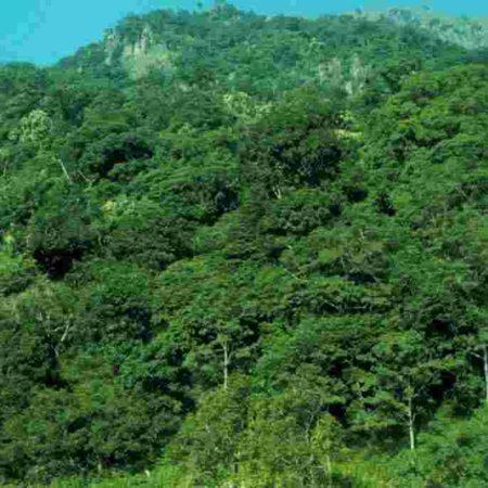 10 raisons pour lesquelles les forêts sont magiques