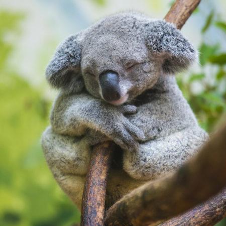 9 espèces menacées d'extinction en raison de la perte de leur habitat